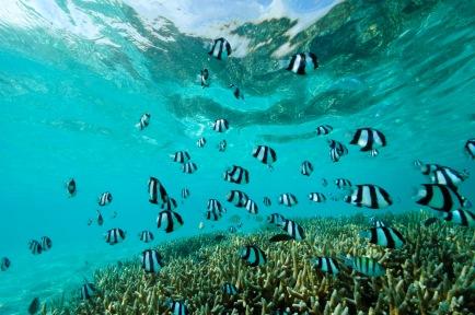 GLM_Underwater Shot
