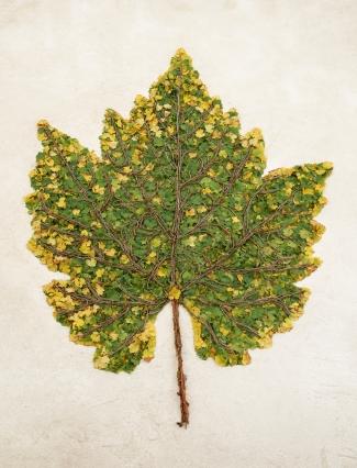 OEUVRES_Chardonnay Leaf.jpg
