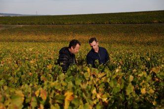 ruinart_vik_muniz_reims_vineyard_8C3A6648_medium.width-1280x-prop.png